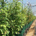 無農薬・有機栽培のピーキャット農場