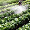 皆さんも農薬問題を考えよう!