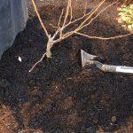 癌腫対策は有機土壌でOK!