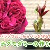 """バラゾウムシからバラを守る!""""ハナグモダミー""""の作り方"""