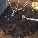 有機栽培の土の作り方
