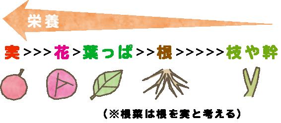 実>>>花>葉っぱ>>根>>>>>枝や幹(*根菜は根を実と考える)