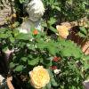 ファイル3:お庭で無農薬3年目!パピヨンさん