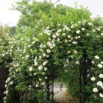 ファイル6:お庭で無農薬20年!P子姫さん