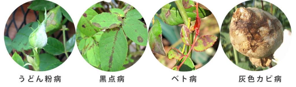 糸状菌による病気の葉っぱ