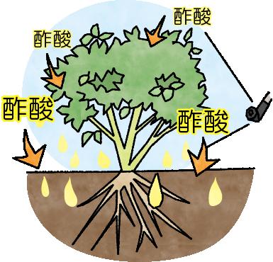 酢酸はクエン酸などよりも植物が吸収しやすい有機酸