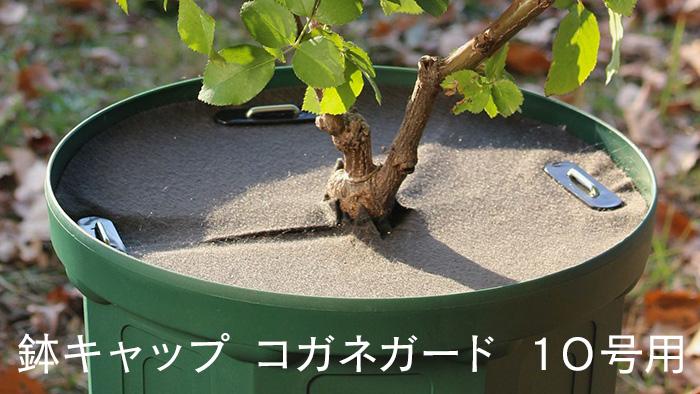 鉢キャップコガネガード10号用